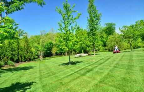 grasmaaien veld maaien